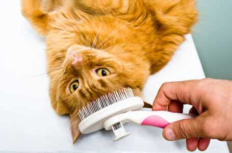 Here Are Some Ways to Groom Your Kitty