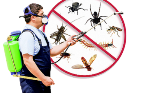 Pest Control: An Important Service You Need